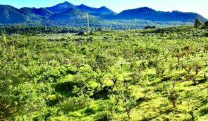 grüne Vulkan-Landschaft